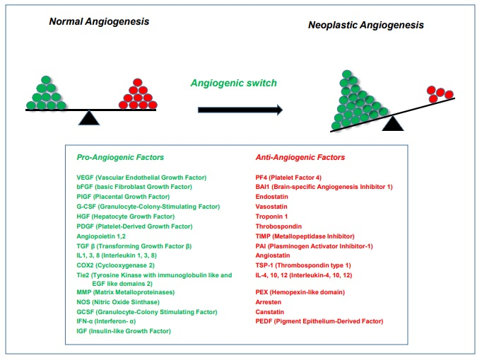 Current Status and Future Perspectives of Anti-Angiogenic Therapeutic Attempts for Glioblastoma